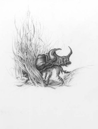 Rhinoceros Beetle by Mark Leithauser, graphite drawing