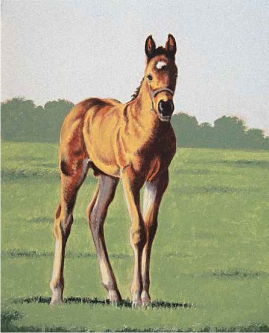 A successful horse drawing is often a matter of getting the leg proportions of the animal correct.