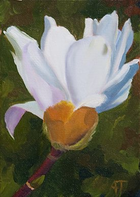 Flower oil painting by Ann Trusty, Late Stellata Bud