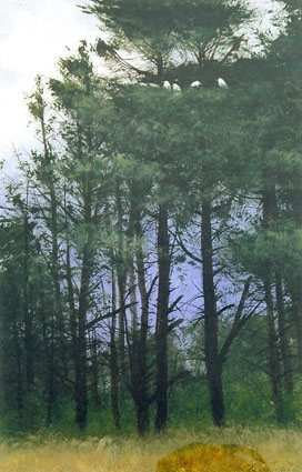 Miguel Dominguez watercolor painting, Nesting Egrets