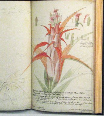 A page from the sketchbook of George Dionysius Ehret, 1748.