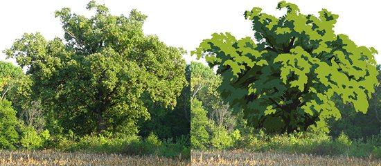Painting trees: This is an example of a mature Hickory tree. Can you see how it has a cascading growth habit, like a Spirea shrub? In this graphic diagram, we have reduced the many small changes in value to four only, and have also consolidated the many small shapes into larger masses. This has strengthened its unique shape and made it more paintable, and yet still conveys the overall look and texture of the branch and leaf formations. Monet would be proud!