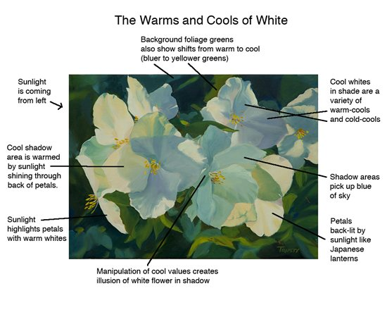 How to draw flowers that are white by John Hulsey and Ann Trusty