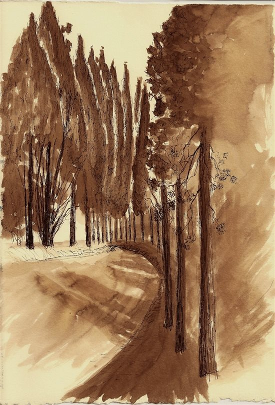 Cypresses in Assisi by Robert Haslach, 2012, pen and ink drawing.