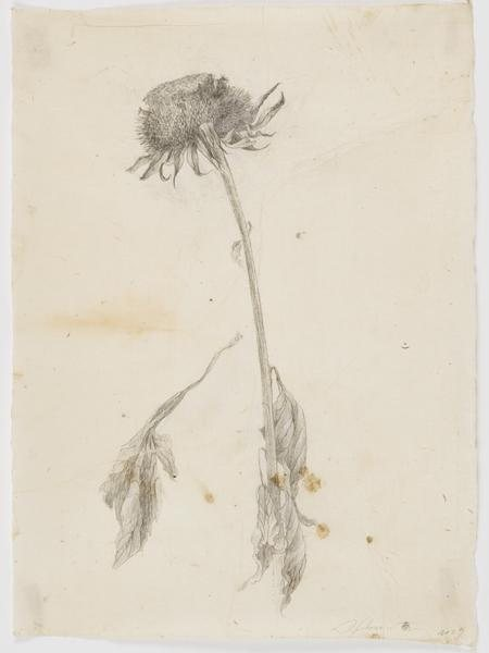 Can you imagine having this drawing as a memento of your travels? I'd love it! Seed Flower by Sarah Horowitz, drawing on antique paper, 16 x 12, 2009.