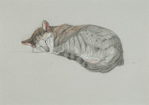 Patricia's sketch, Long Sleep, shows how to draw a cat.