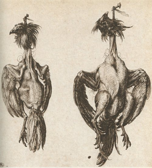 Plucked Chickens Hanging from Nails by Jacob de Gheyn, 1598, pen and ink drawing, 6 1/2 x 6.