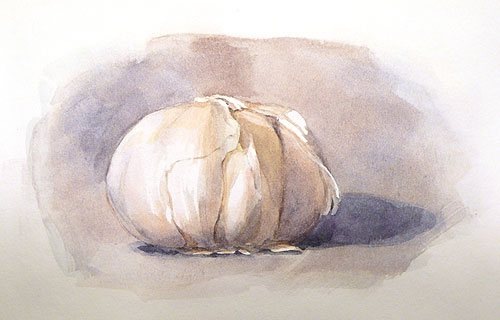 Watercolor painting by Hsuan-Chi Chen of a bulb of garlic, created using masking fluid.