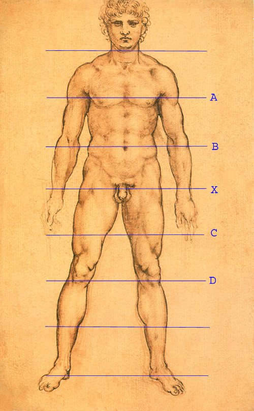 Frontal Study of Naked Man by Leonardo, 1503- 09, pen and ink drawing, 9 1/4 x 5 3/4.