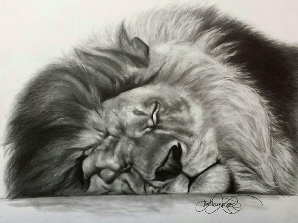 African lion drawing by Lee Hammond | ArtistsNetwork.com