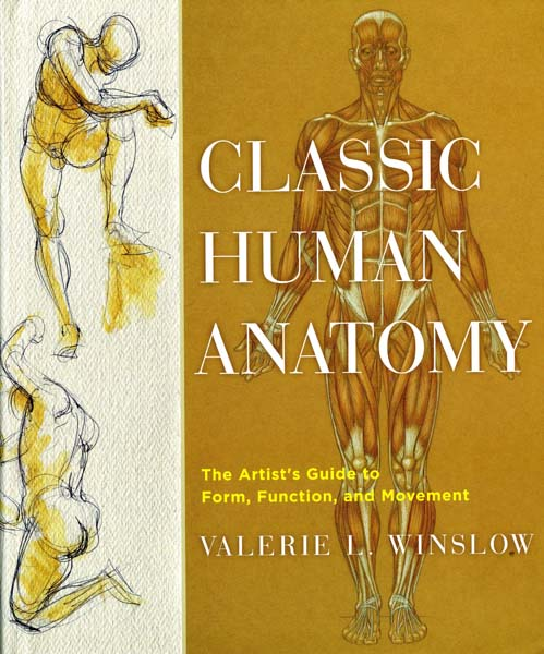 Classic human anatomy--an artist's guide for figure drawing