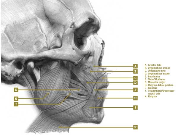 Understanding Anatomy Lips Artists Network