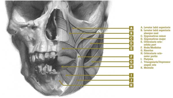 Understanding Anatomy: Lips - Artists Network