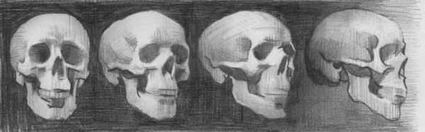 Understanding Anatomy: The Skull - Artists Network