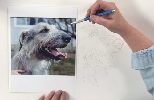 Carrie Stuart Parks Is Anotherartist Well Known For Excellent Dog Drawing Lessons