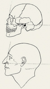Learn how to draw a nose and other facial features in this free guide.