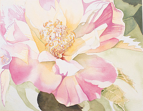 Watercolor painting demonstration painting petals for How to paint a rose in watercolor step by step