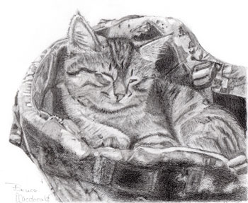 How to draw cats; art by Bruce McDonald | ArtistsNetwork.com