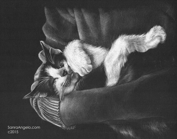 How to draw cats, by Sandra Angelo | ArtistsNetwork.com