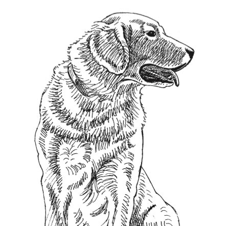 How To Draw A Dog A Free Drawing And Painting Lesson Artists Network