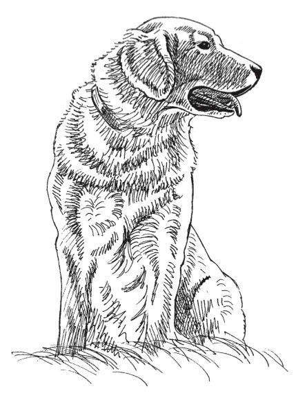 How to draw a dog, with Jeanne Filler Scott | ArtistsNetwork.com