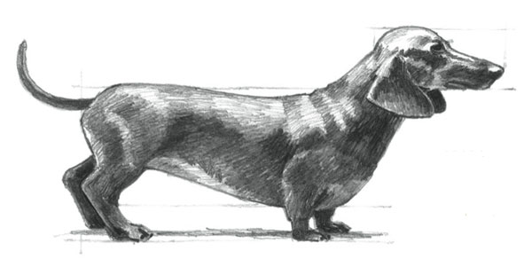 How to draw a dog | Mark and Mary Willenbrink, ArtistsNetwork.com