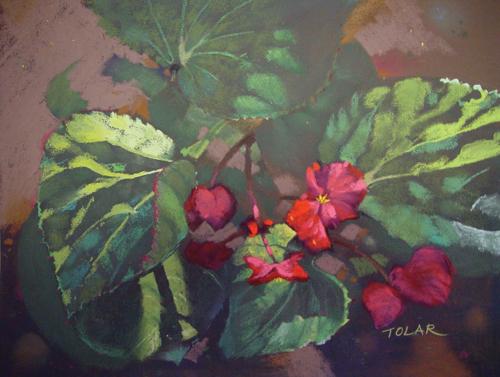 Morning Begonias (pastel, 11x14) by Jude Tolar   pastel florals