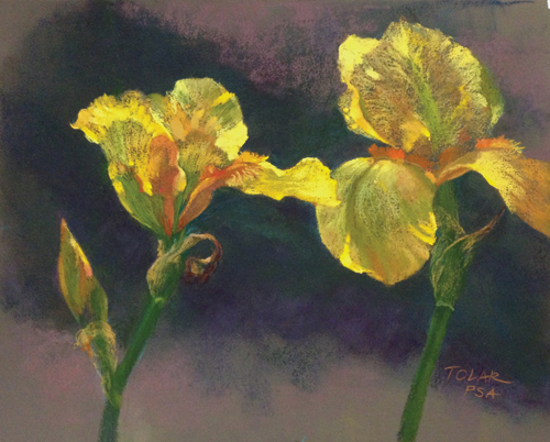 The Unfurling (pastel, 11x14) by Jude Tolar | pastel florals