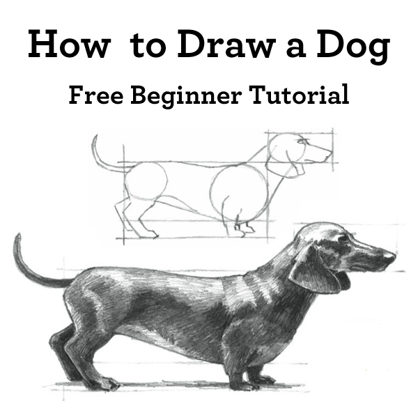 Learn how to draw a dog with this free drawing tutorial!