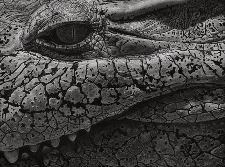 NewGuineaCrocodile by John Agnew