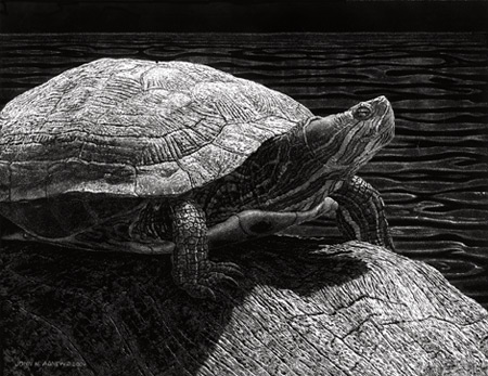 Red-Eared Slider by John Agnew