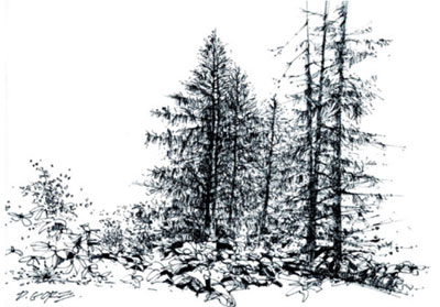 Textured-Trees-drawing-trees-Cathy-Johnson-070716