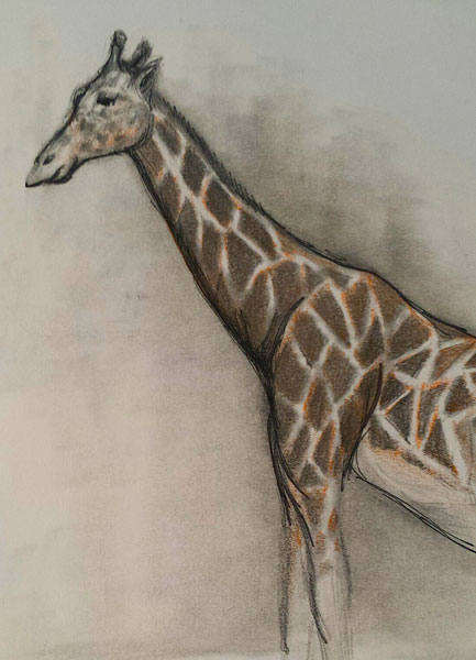 Drawing animals at the zoo | Lee Hammond, ArtistsNetwork.com