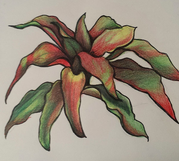 Drawing plants at the zoo | Lee Hammond, ArtistsNetwork.com