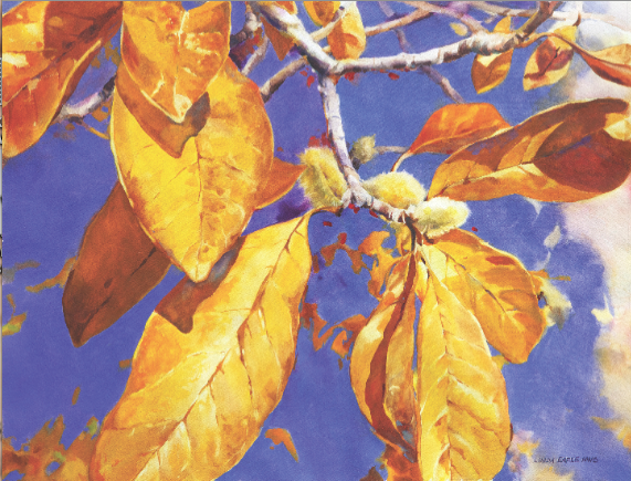 "FALL MAGNOLIA Linda Erfle Transparent Watercolor on Paper 18"" x 24"""
