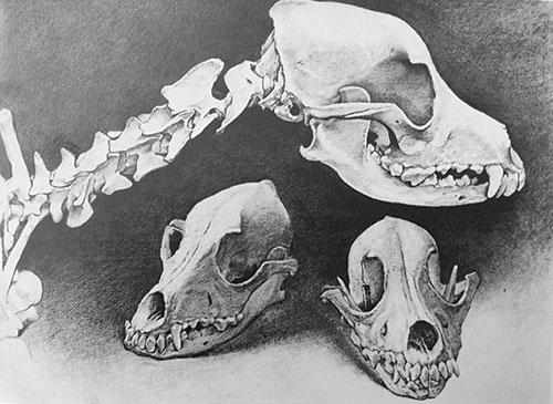 Best Mechanical Pencil: Dog Skulls | Sherry Camhy| best mechanical pencils, Drawing magazine, drawing tips, graphite