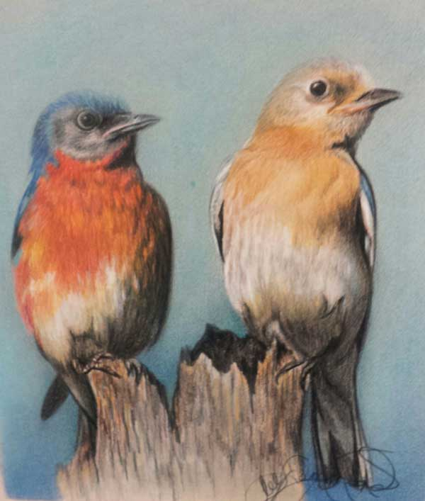 Drawing birds | Lee Hammond, ArtistsNetwork.com