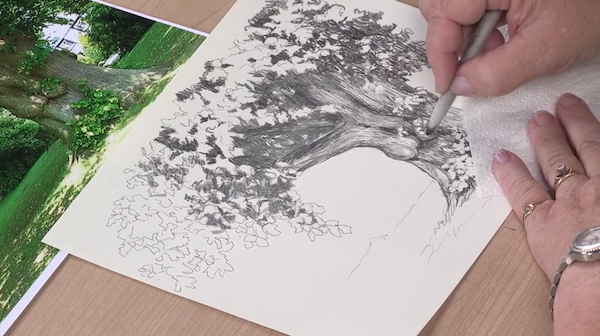 Use contour lines and contrasts for realistic landscape pencil drawings of trees.