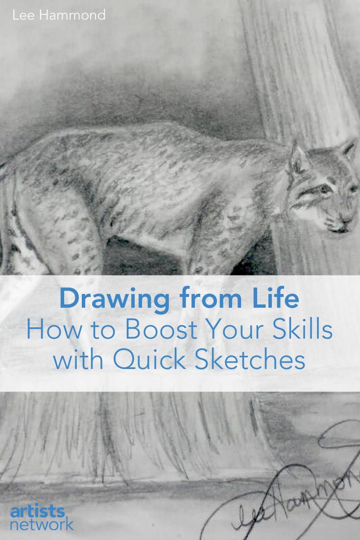 Drawing from Life - Bobcat - Lee Hammond - ArtistsNetwork