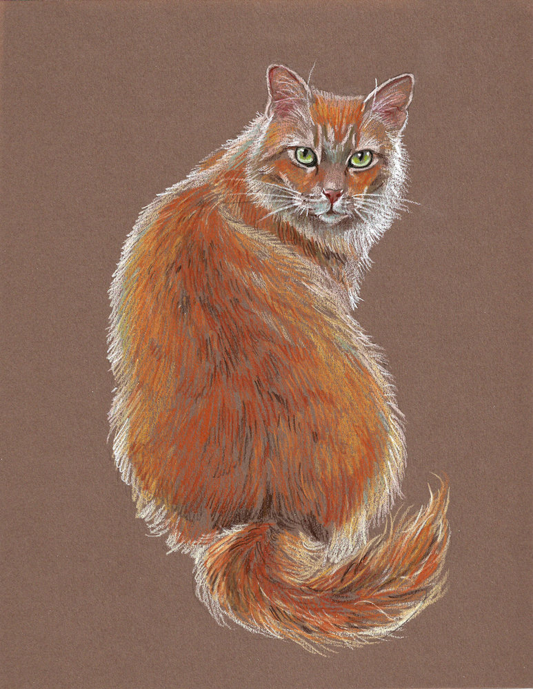 draw the perfect cat with these easy colored pencil tips