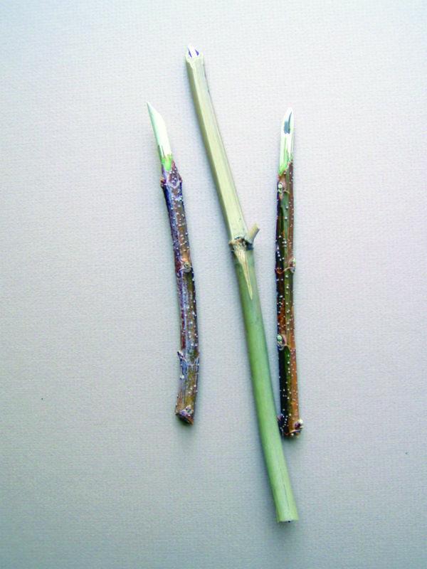 Making Pens from Sticks | Margaret Davidson | Artists Network