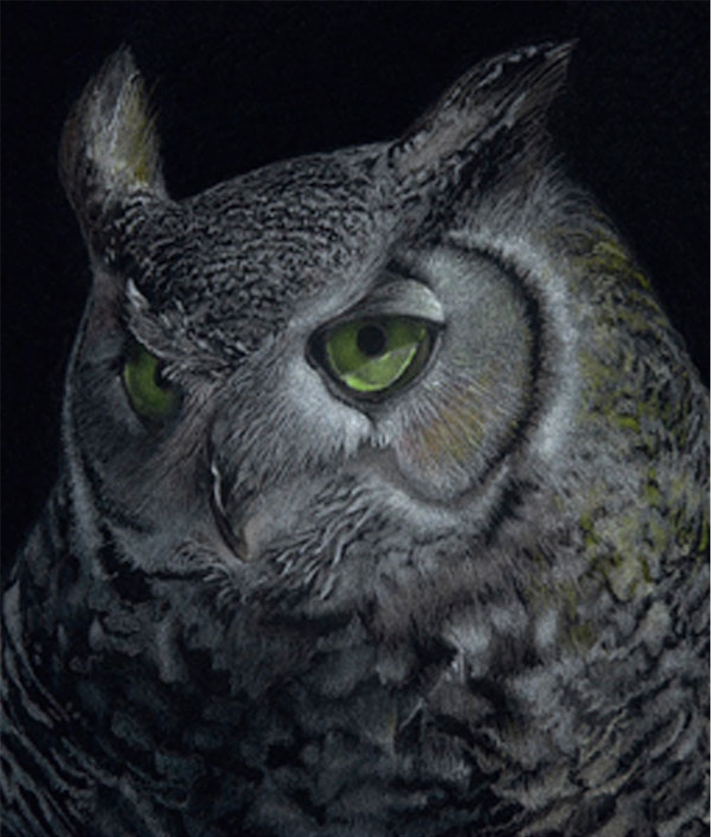 Night Owl | Colored Pencil Techniques | Black Paper | Art Demonstration | Janie Gildow | Artists Network