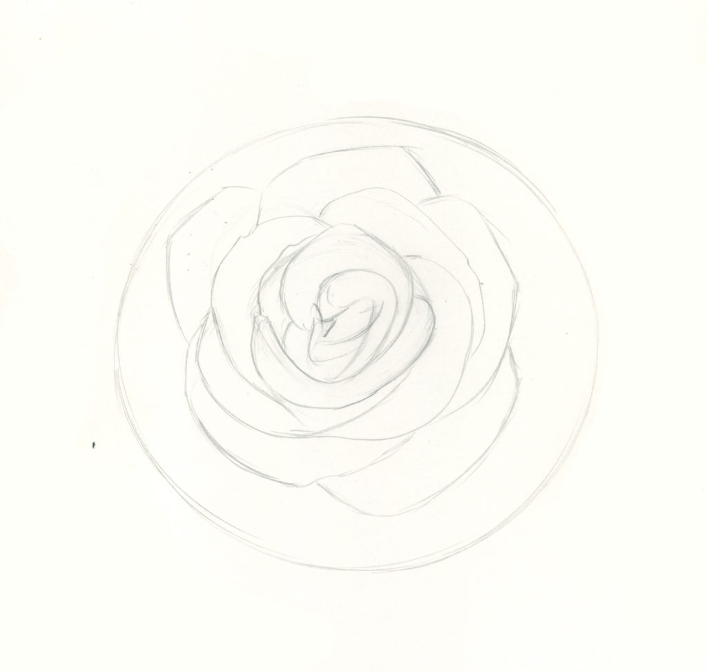 How To Draw Roses A Beginner Step By Step Demo In Graphite Pencil