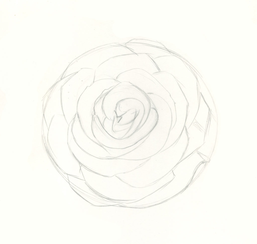 how to draw a rose - HD 1024×973