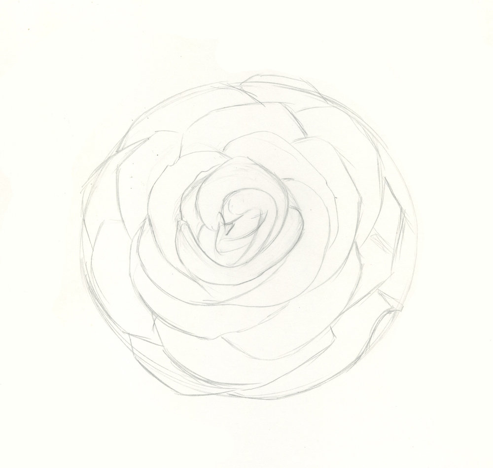 how to draw roses step 5