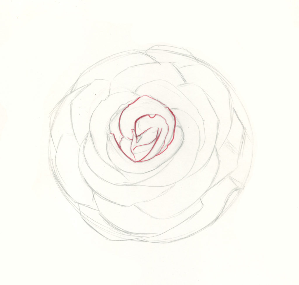 how to draw roses step 6