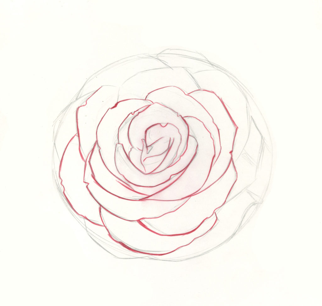 How To Draw Roses A Beginner Step By Step Demo In