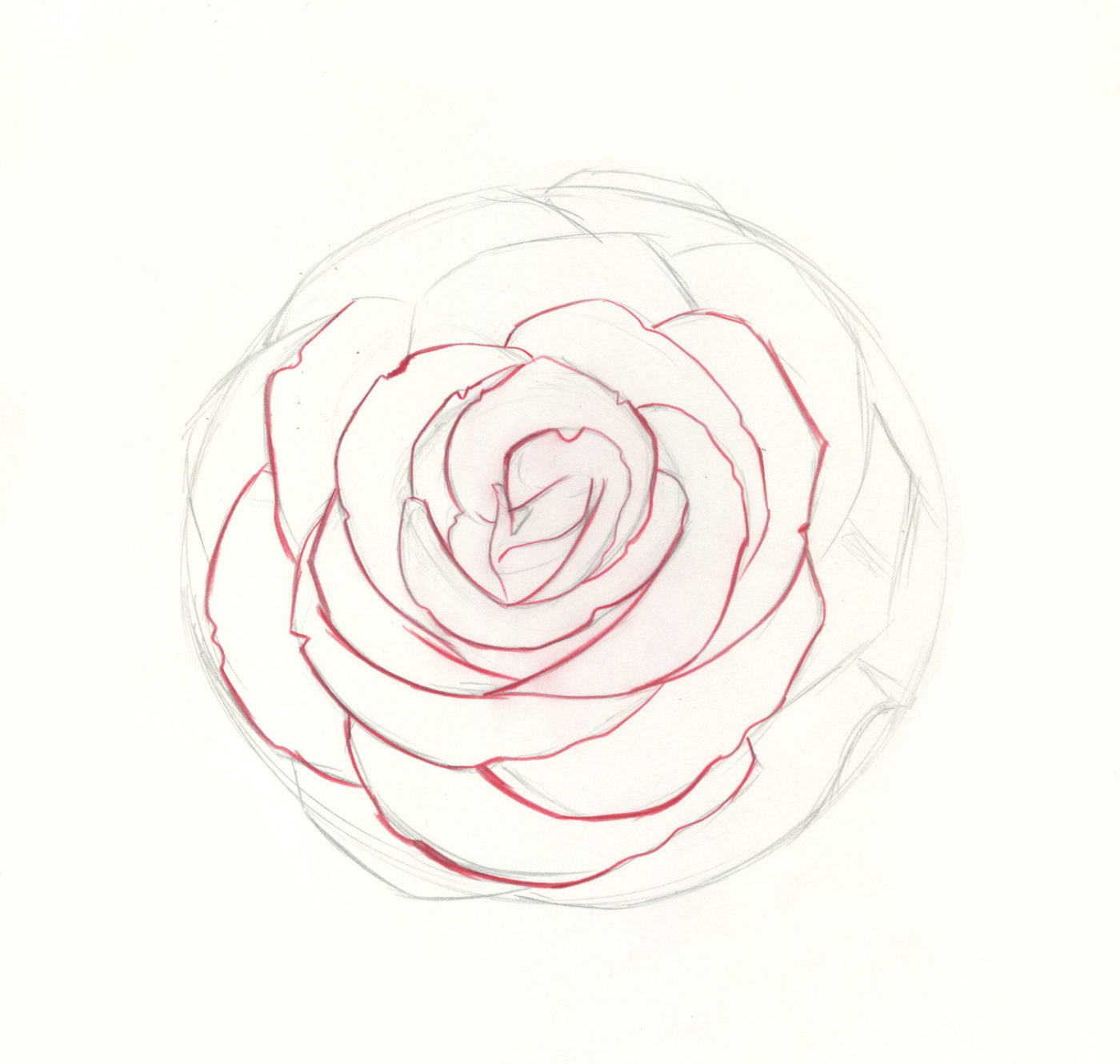 how to draw roses step 8