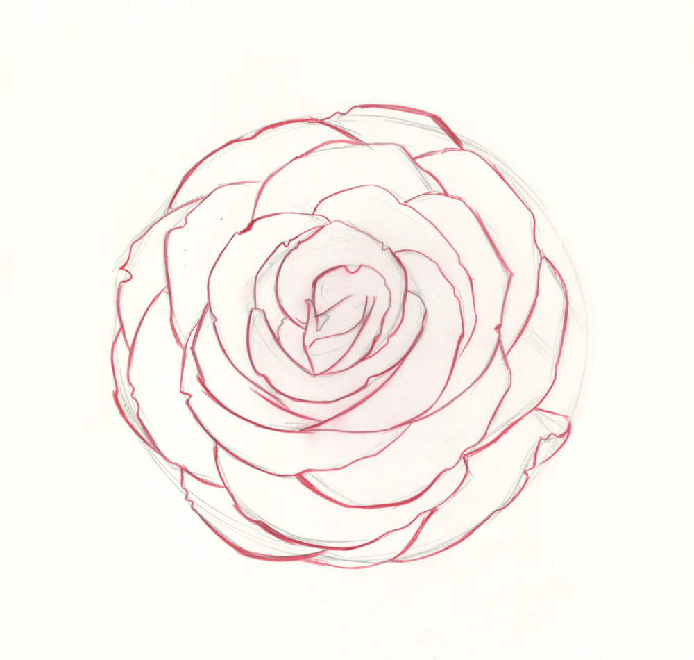 how to draw roses step 9