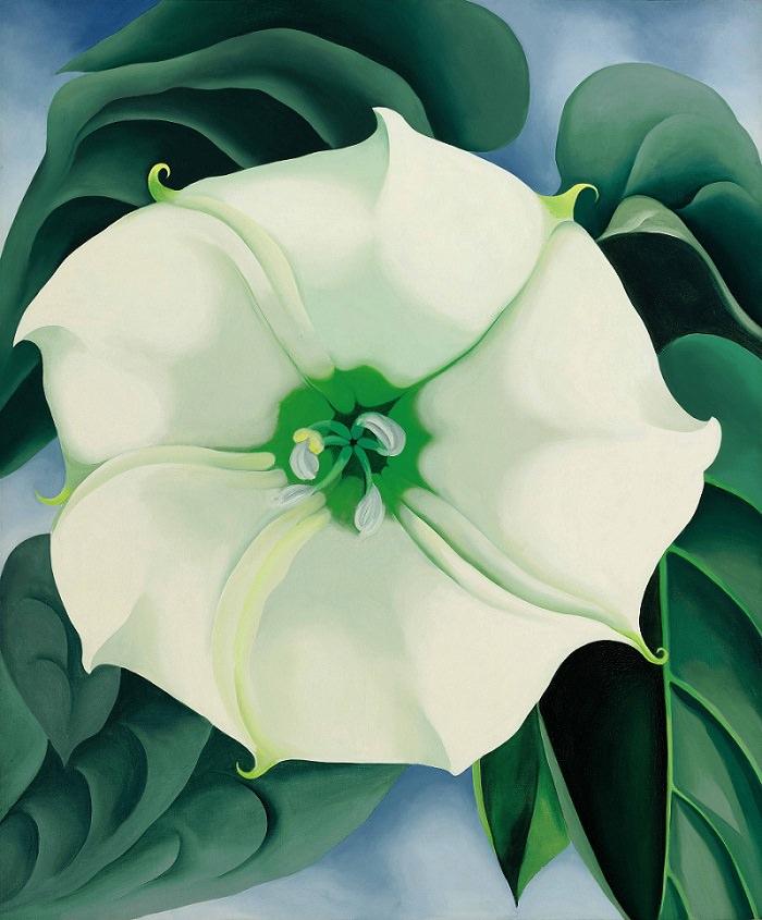 Jimson Weed by Georgia O'Keeffe